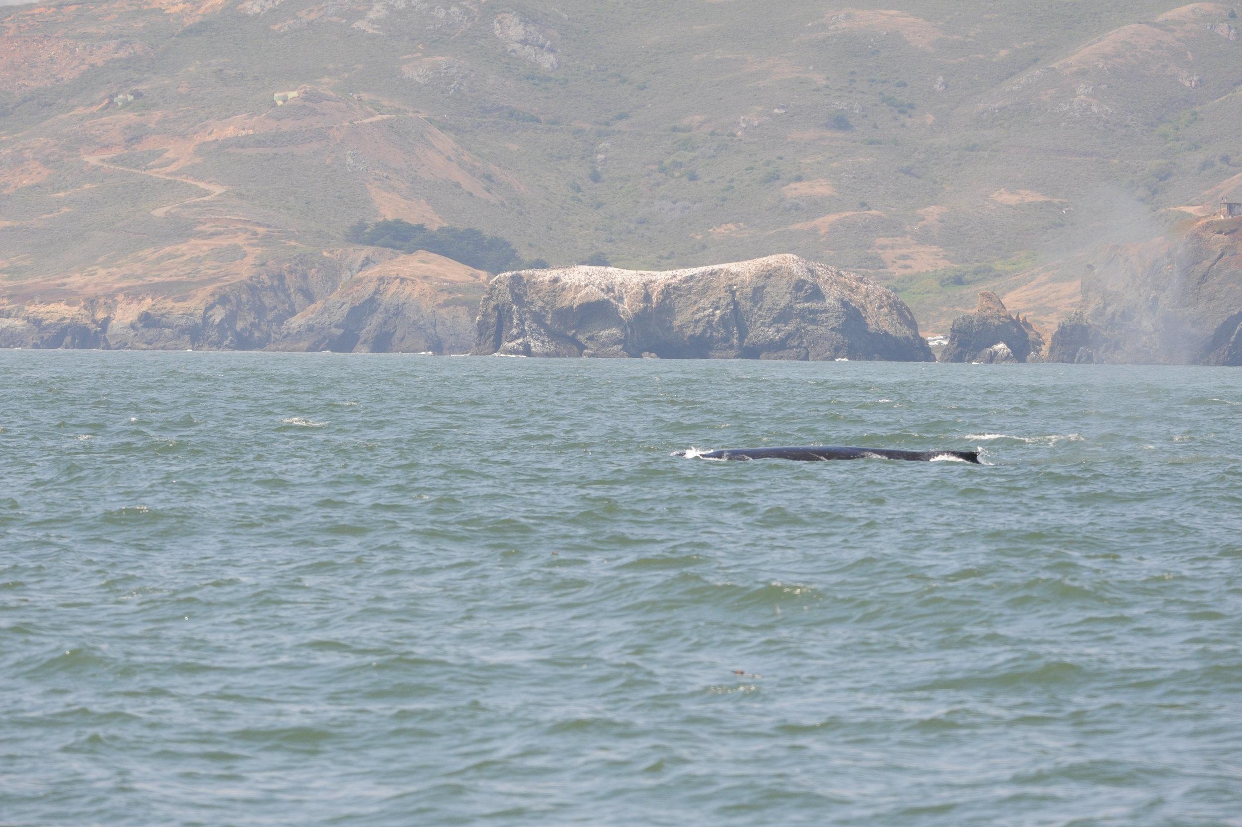 Humpback whale!