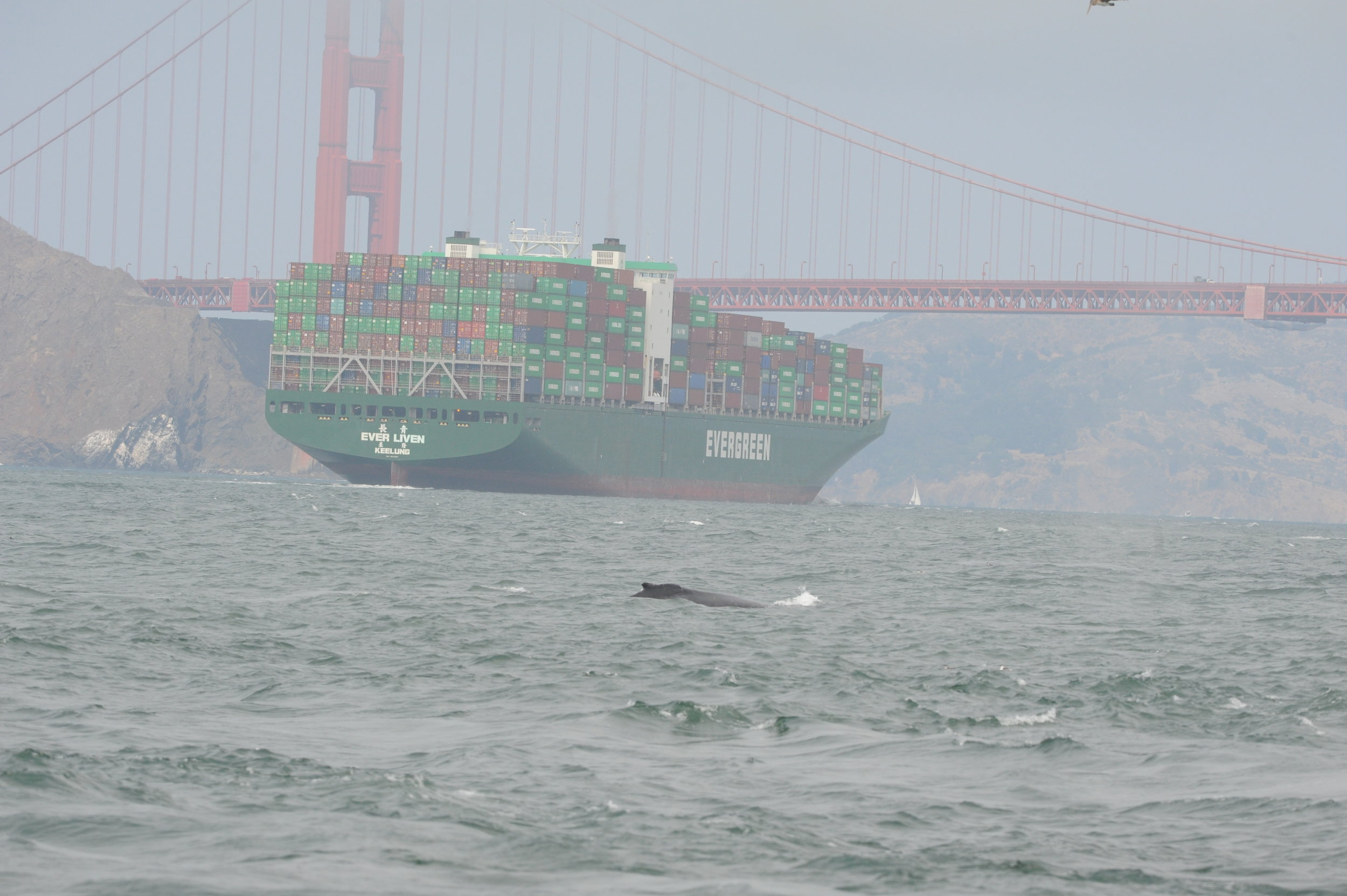 Humpback in between us and a large container ship.