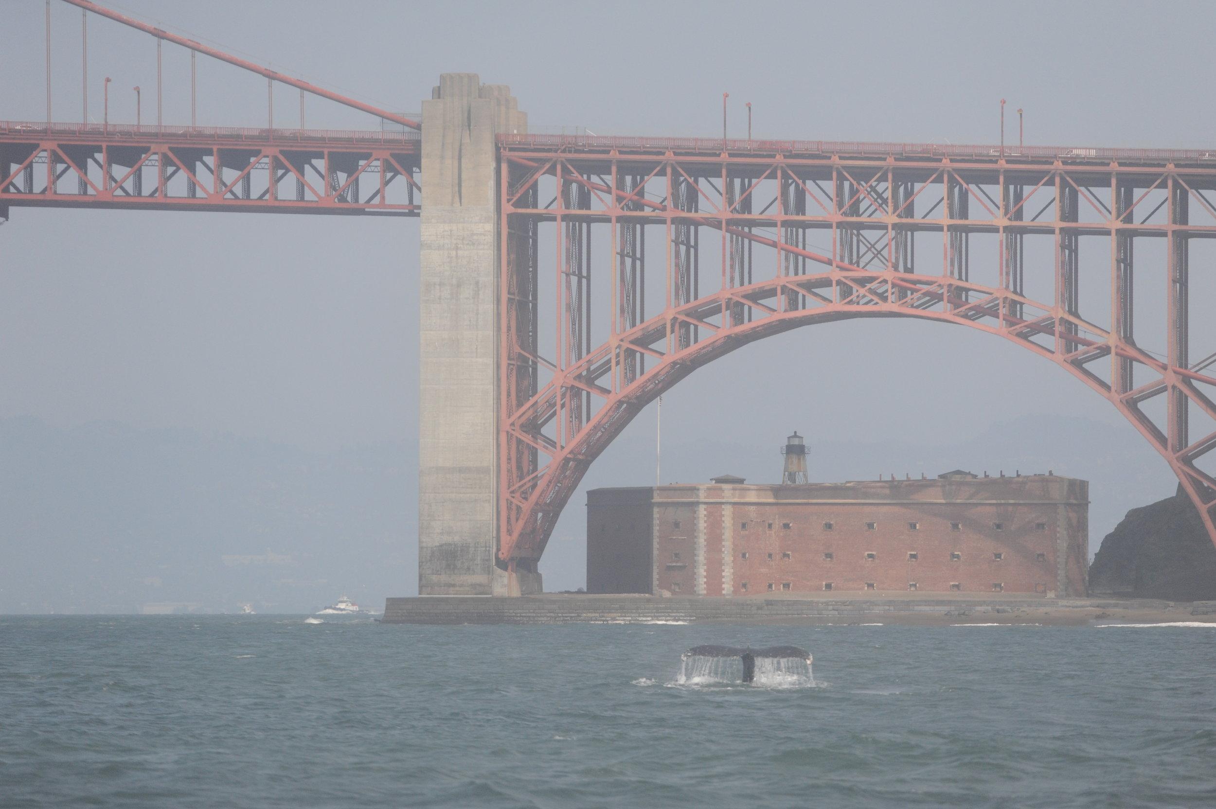 Fluke just outside the bridge.