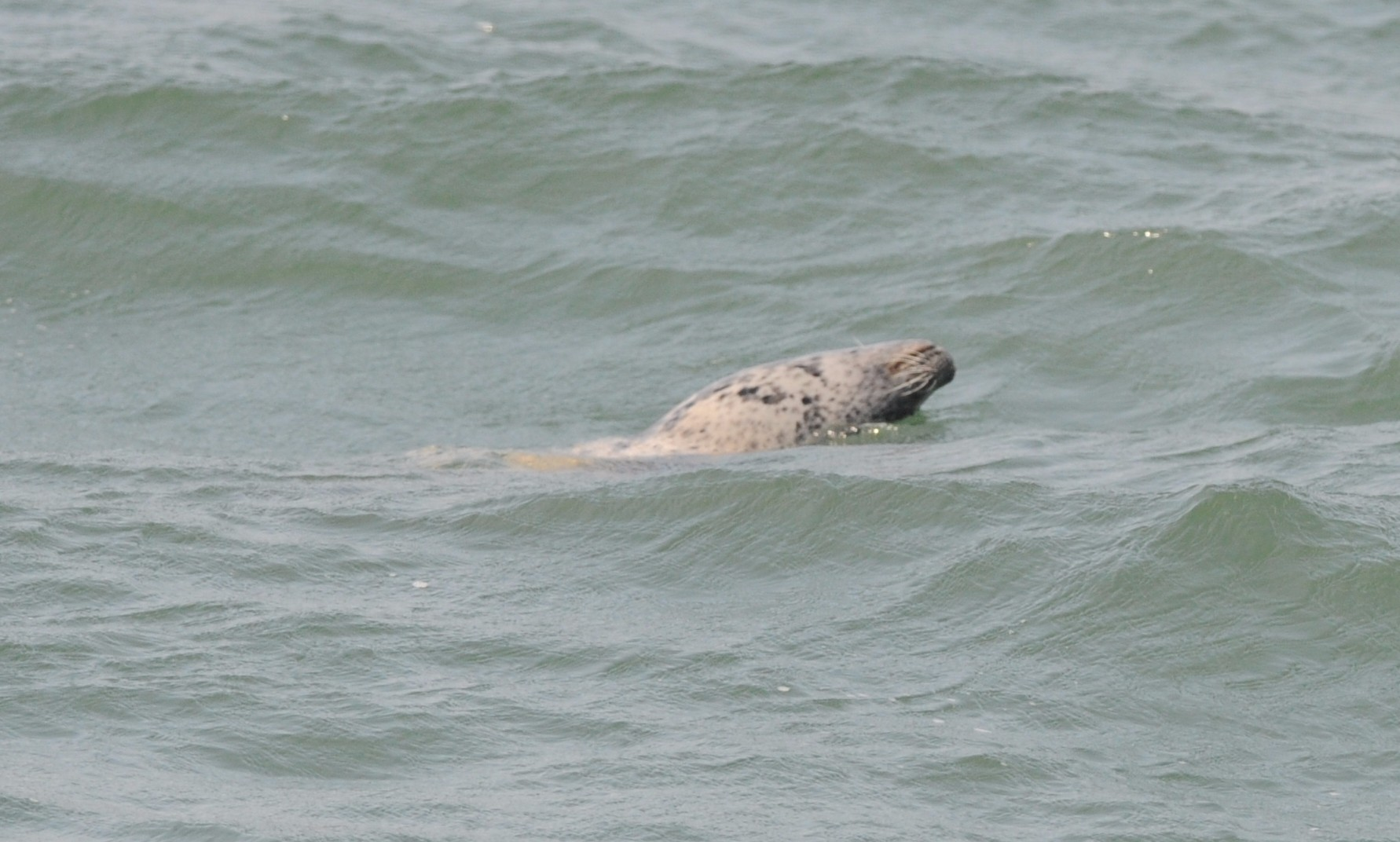 Harbor seal off our stern.