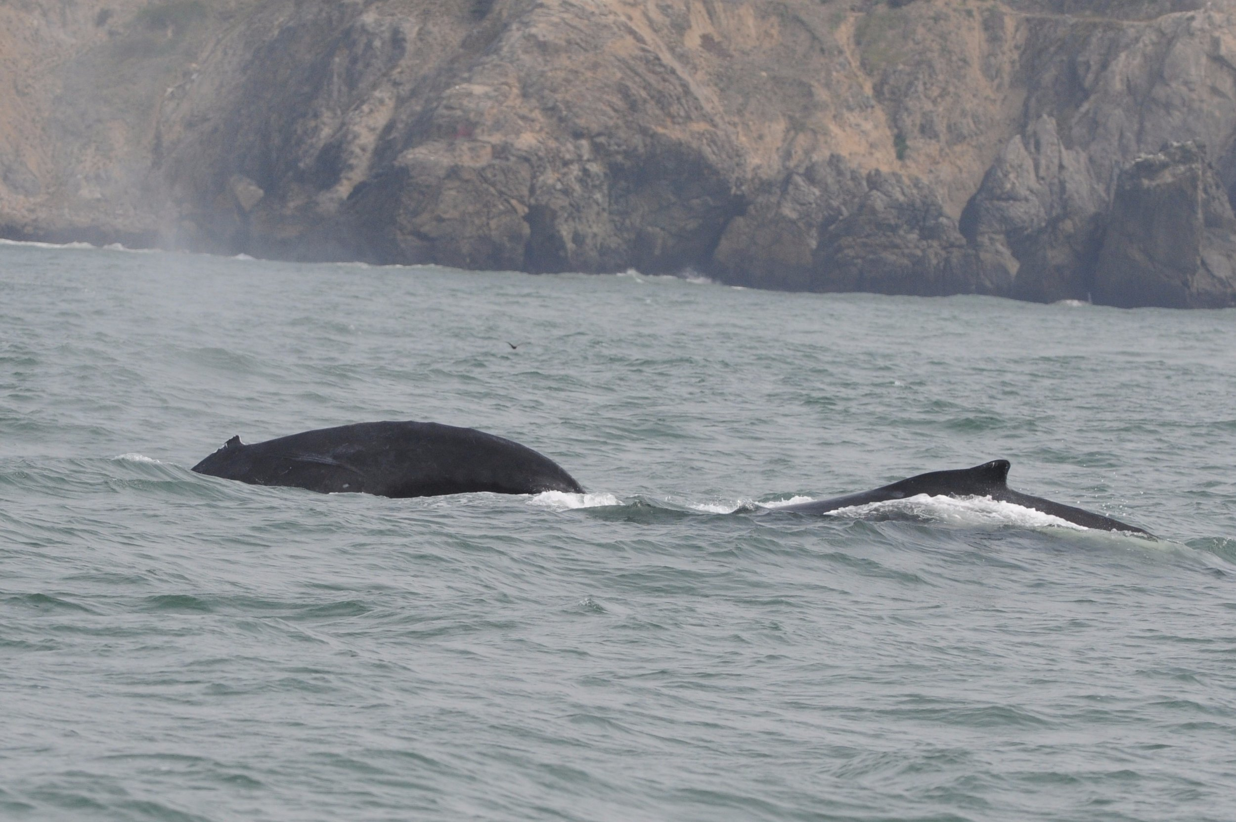 Mother and calf surfacing together.