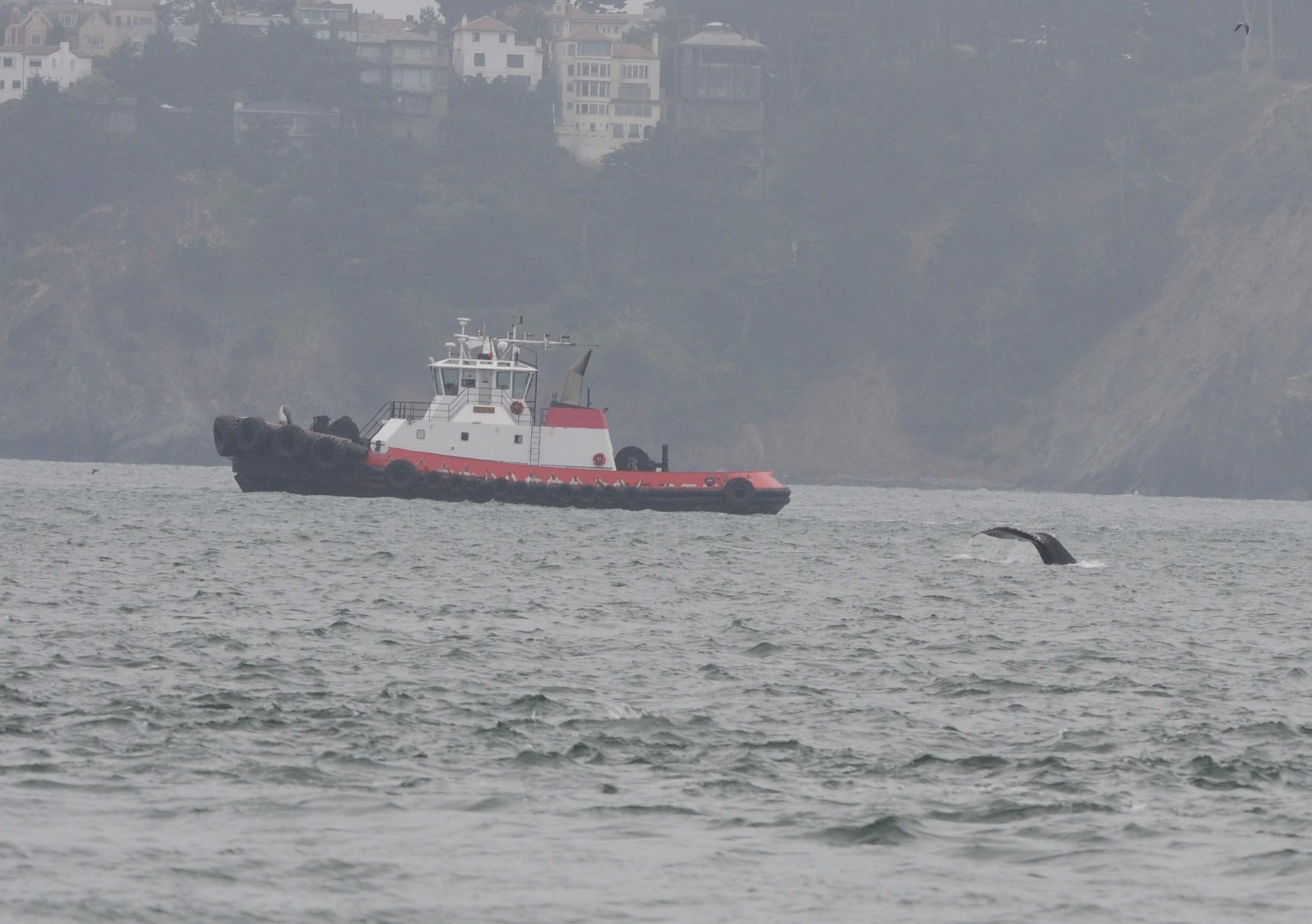 Fluke near the pilot boat.