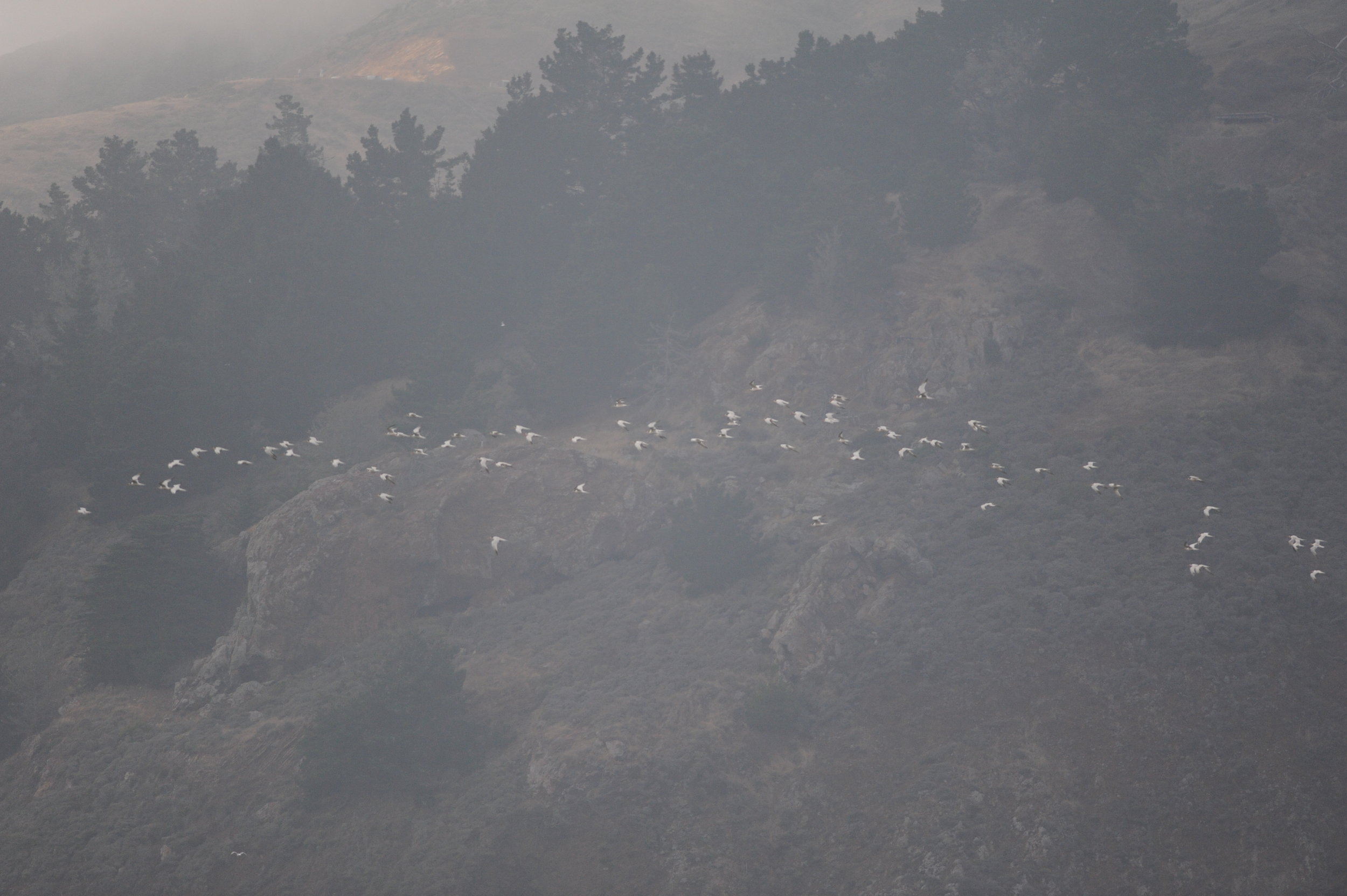 Elegant terns flying by.