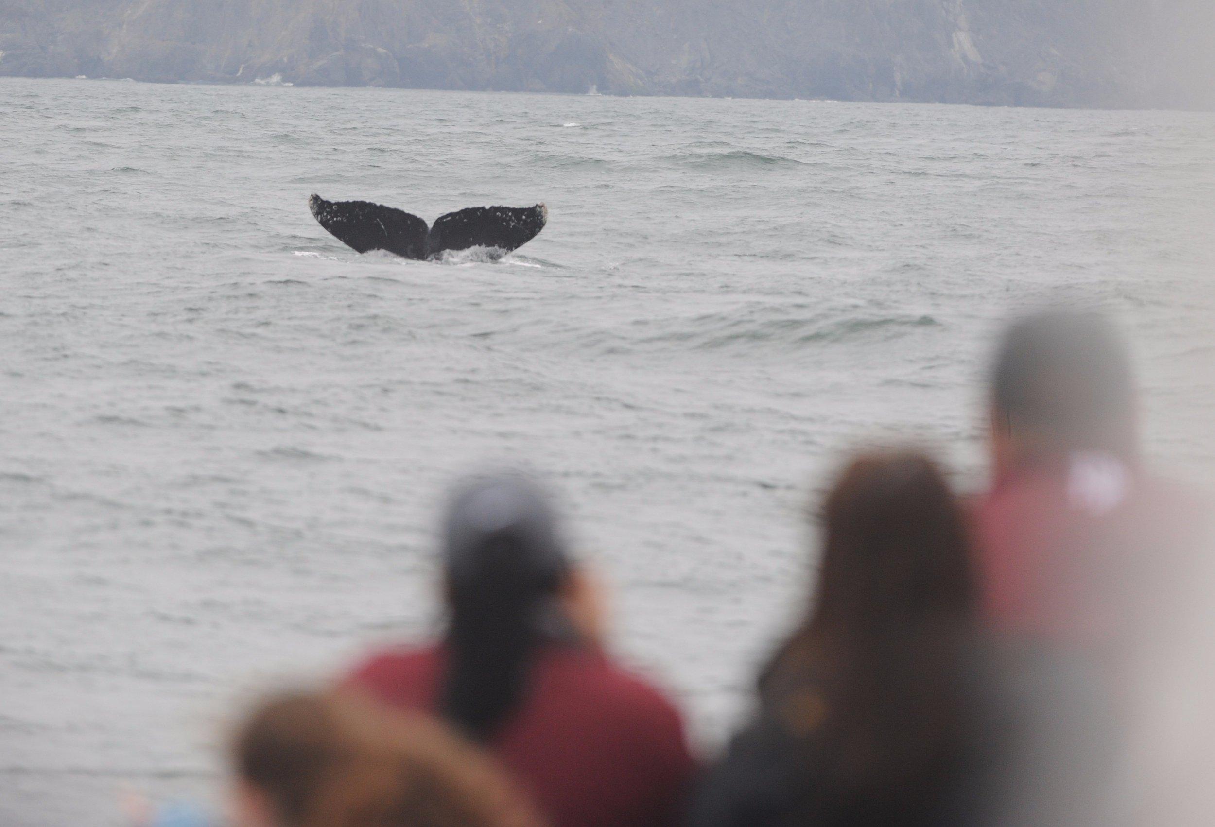 Whale watchers and a humpback fluke.