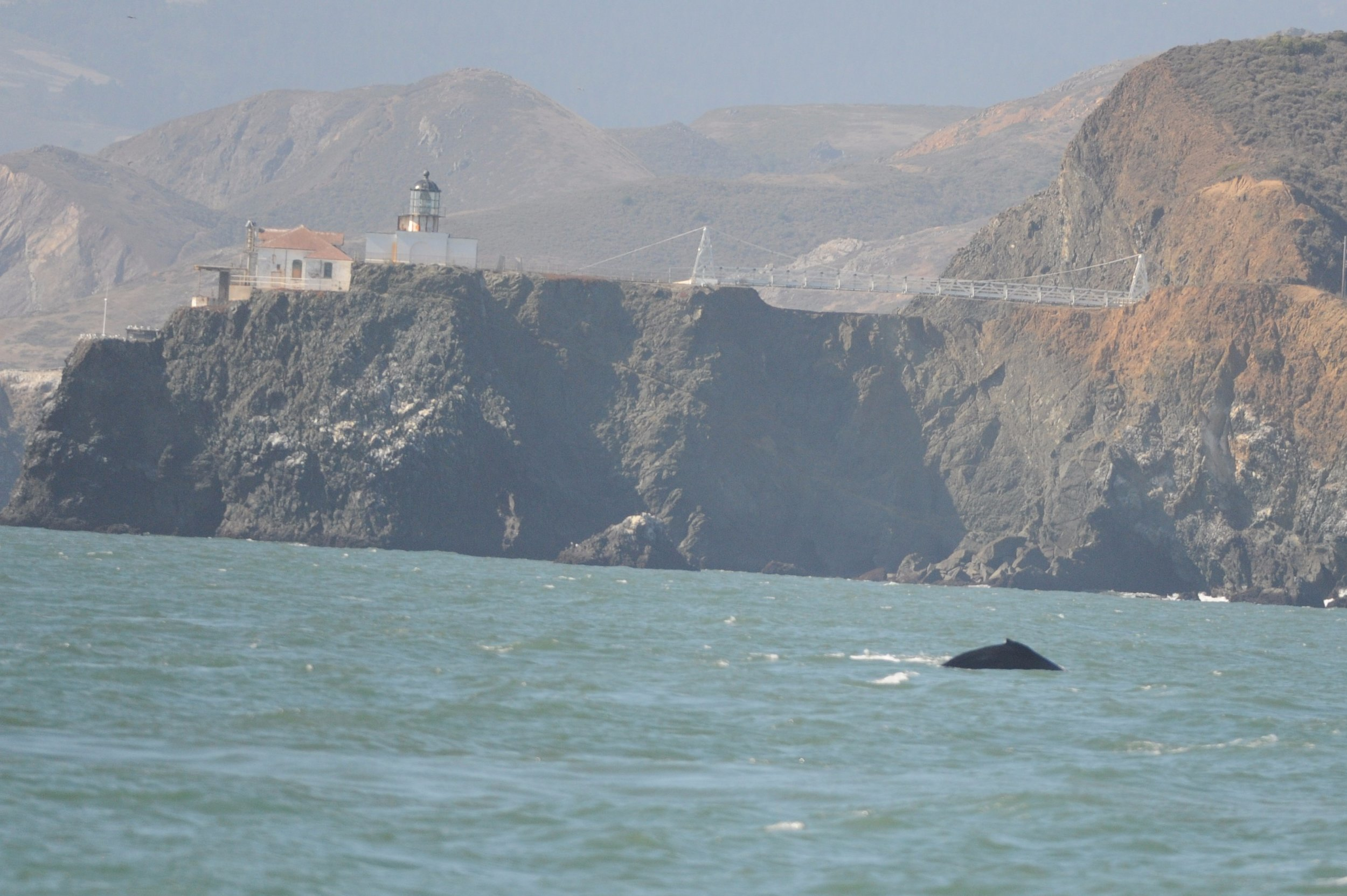 Humpback near Point Bonita.