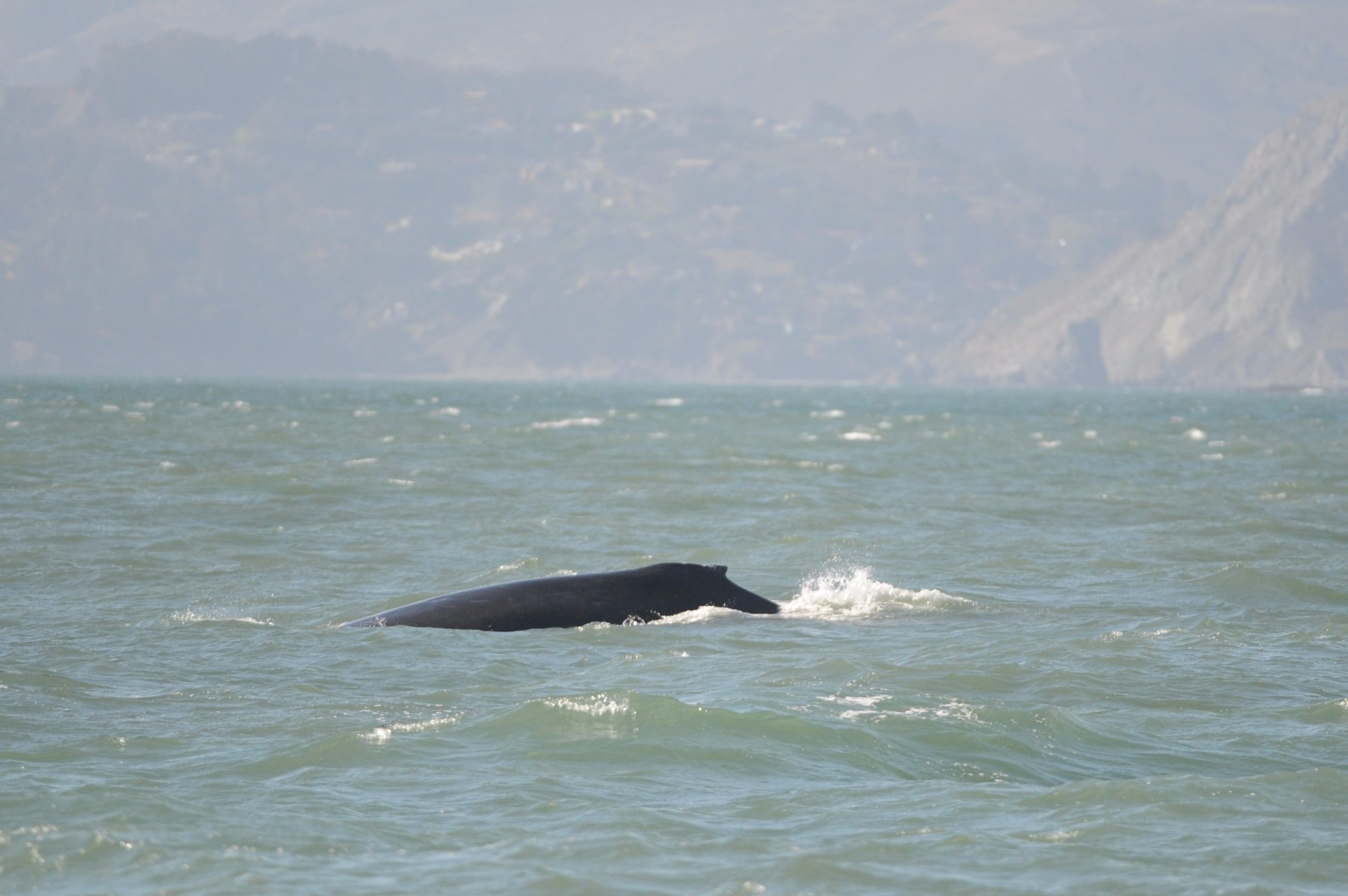 Humpback heading west.