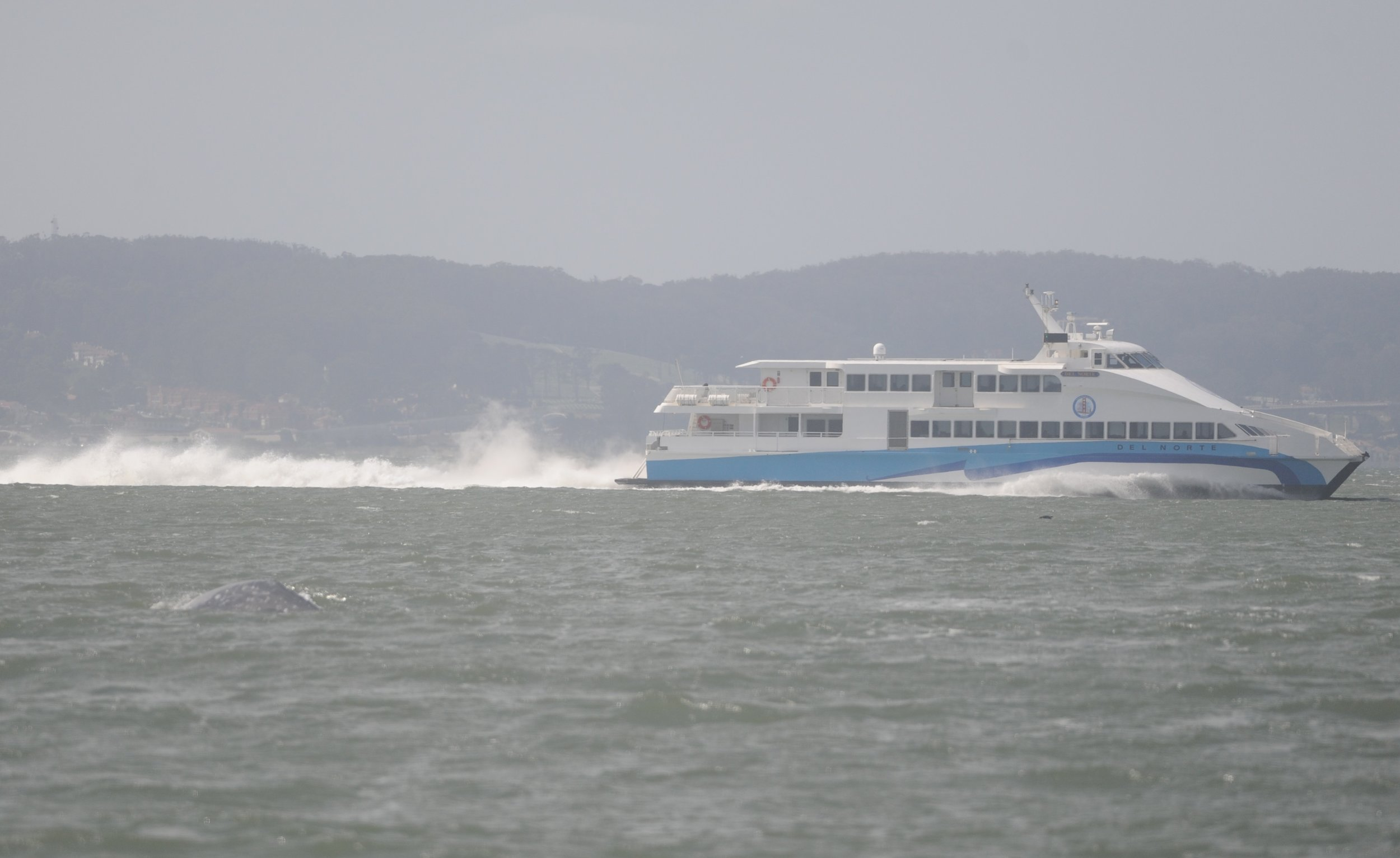 The whale blends in with the water near this ferry.