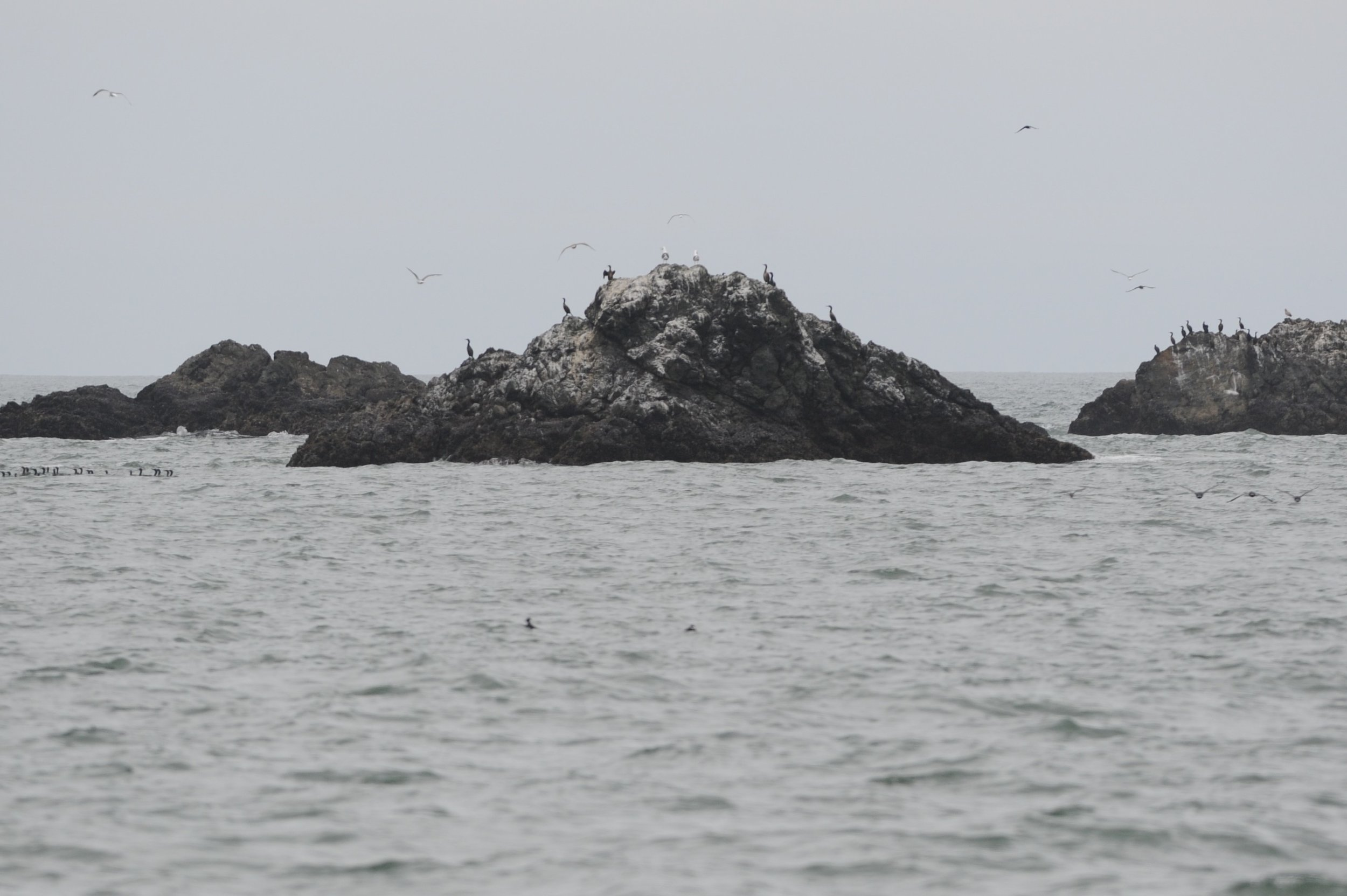 Birds near Point Bonita.