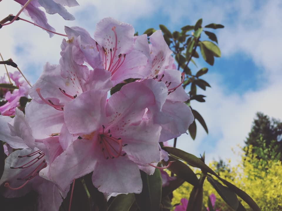 pink flower and blue sky.jpg
