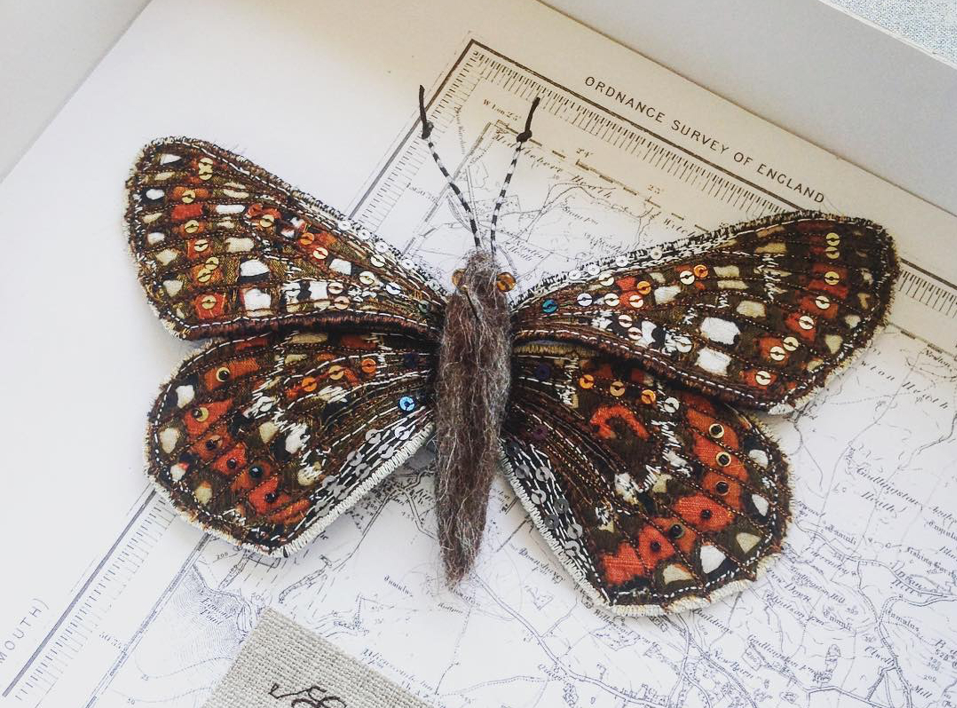 Insects_heather.everitt.emb_koel stories.jpg