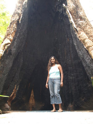 hollowed-out-trunk-typical-.jpg
