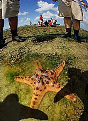fancy-starfish-by-kwan-sai-.jpg