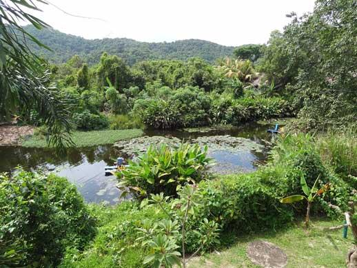 Frangipani Langkawi Resort in Malaysia purifies grey water using aquatic plants.