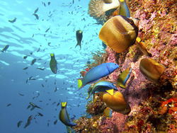 Clear waters and spectacular underwater creatures are a common in Timor-Leste.