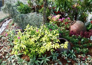 Ferns and foliage