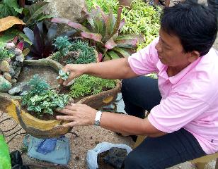 Local creating a dish garden