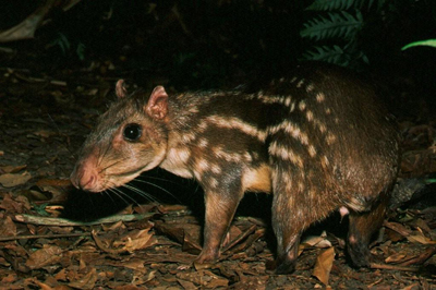 Belize offers some amazing wildlife - that only comes out at night in some cases