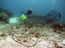 A turtle-shaped Biorock structure just laid down and being transplanted with coral fragments