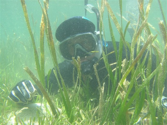 Dr Miguel Fortes: Seagrass still yet to be understood