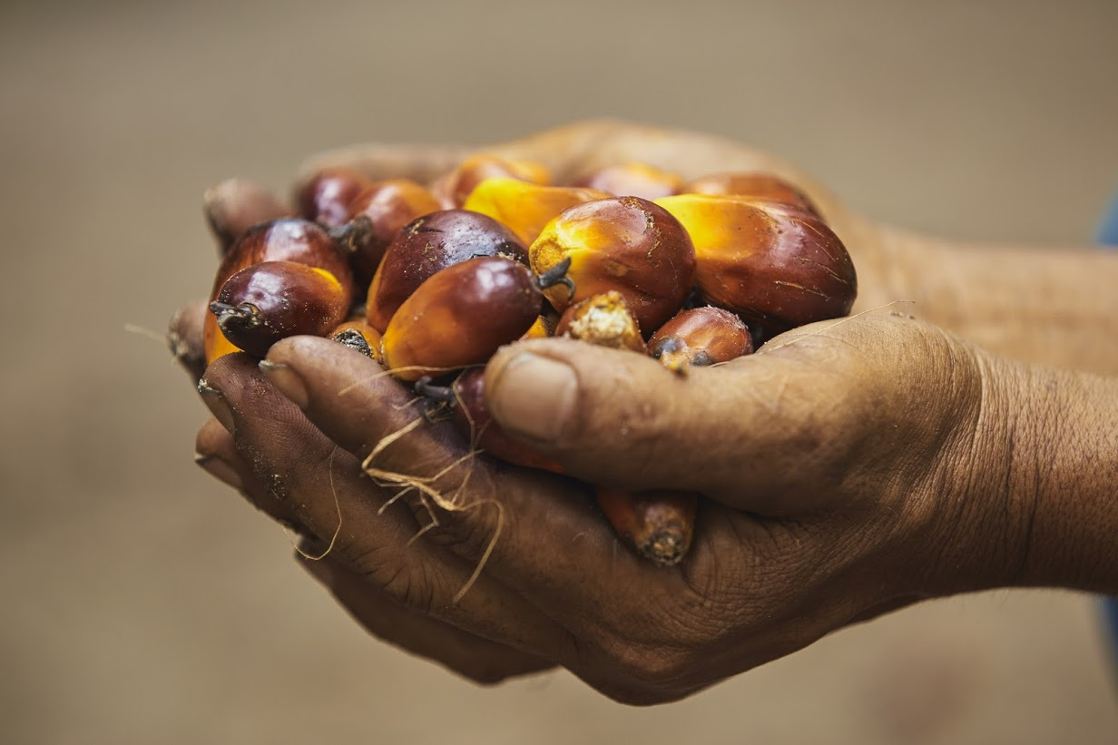 Singapore Alliance for Sustainable Palm Oil hopes to put the future of people and habitats in the hands of responsible palm oil players.