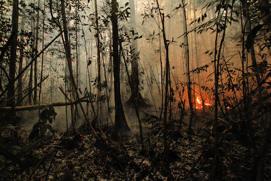 The deliberate torching and burning of nature reserves and primary forests such as this Sabangau forest in 2015 continue year after year in spite of many measures. Switching to supporting ethical producers will send a clear signal on what people really want. Pic: Bernat Ripoll Capilla