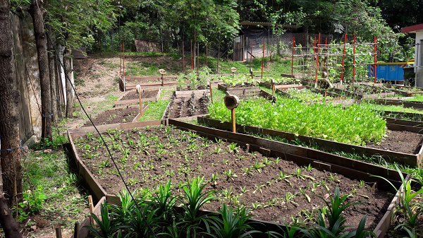 Don't be surprised if you're eating fresh greens harvested from Villa Samadhi Singapore's very own vegetable garden patch
