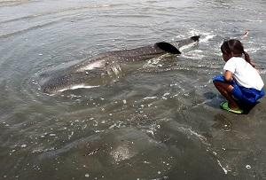 A dead shark found near Tagum City, Philippines. Courtesy Darrel Blatchley.