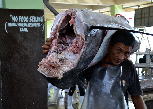 Sea fishing is taking a heavy toll on some species of fish - such as tuna.Courtesy H.D.Tacio.