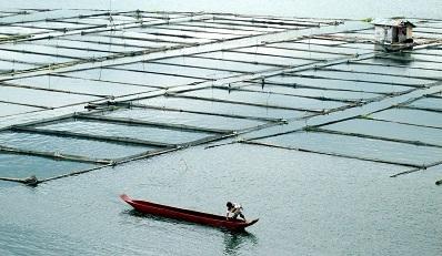 Marine farming is seeing a rapid increase in Filipino waters. Courtesy H.D.Tacio.