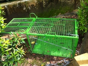 Trapping macaques to remove them followed by euthanisation is not an ecologically sustainable solution.