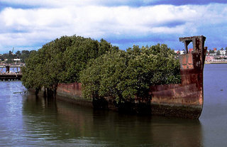 The Ayrfield is one of the most photographed wrecks in Sydney (photo credit - RedBubble)