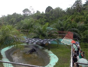 From a creek to an enlarged tub, Lolong lived out the rest of his days entertaining tourists.