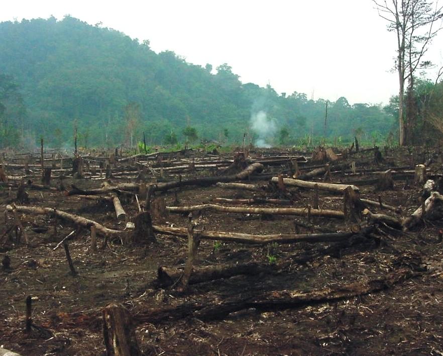 Deforestration in Philippines