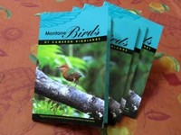 Cameron Highlands birds captured.