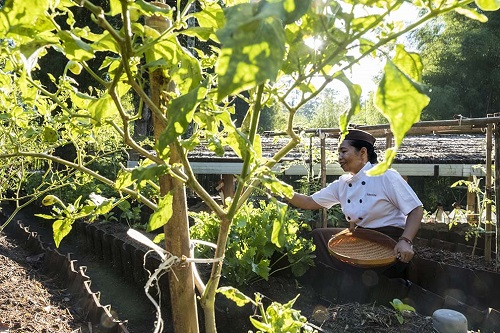 Alila's organic gardens supply much of the produce for the resort's kitchens. Courtesy Alila.
