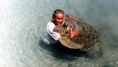 Marine turtle.jpg
