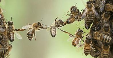 architect-bee-wax.jpg