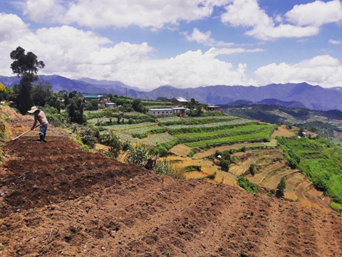 Traditional hill cultivation often results in rapid erosion. Courtesy Frank A Hilario.