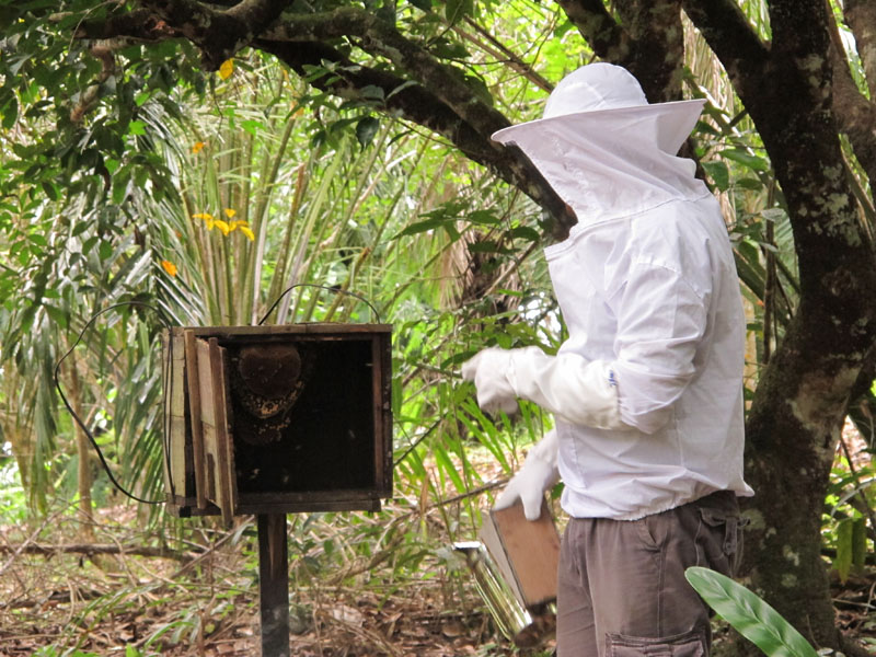 Beehives are a way of deterring elephants from straying into agricultural plantation, an on-going elephant conservation project at Sukau Eco Lodge.
