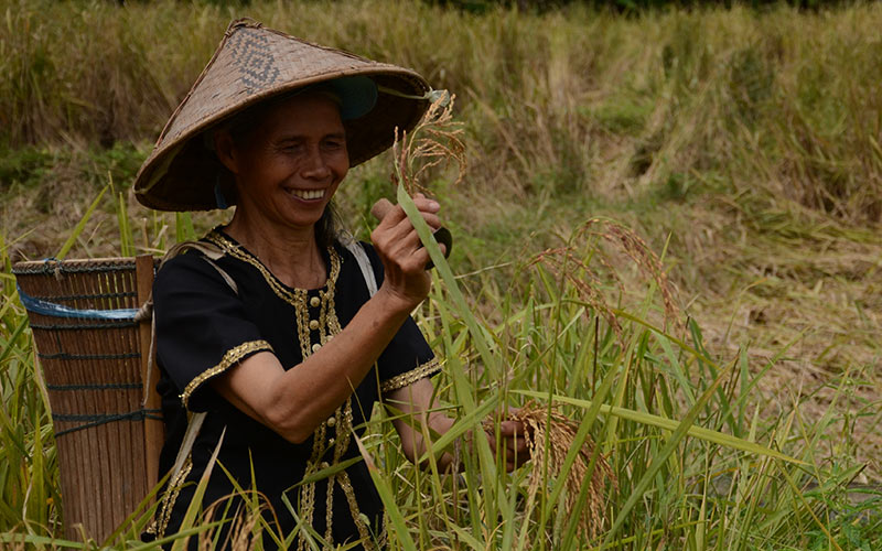 Rice farming projects and bamboo making facilities keep rural villagers busy and smiling with the extra income earned. This is also an ecotourism venture at Kiulu Farmstay in the Dusun community of Sabah, Malaysia. Courtesy: BEST