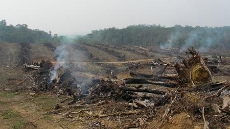 Courtesy Rainforest Action Network