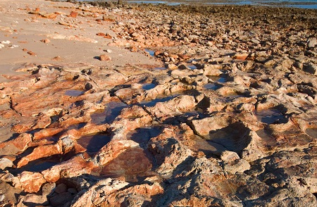 Dinosaur footprints? You can literally trip over them on the Dampier Peninsula. Courtesy Science News.
