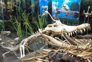 The d'Bone Museum is a popular attraction in Davao. Courtesy Davao Tourism.