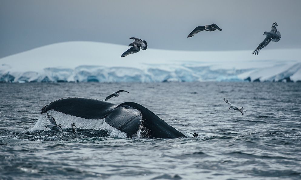 Warmer air temperature, melting ice, over fishing, plastic pollution, drilling for oil and gas are near and present dangers that must be mitigated through MPAs in areas surrounding the Antarctica. That's the reason for Lewis Pugh and friends campaigning through the Antarctica2020 network.