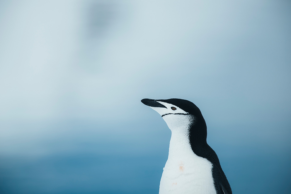 Penguins are pretty, but they are also part of an ecosystem that is vital for ocean survival. And they need our protection, says Lewis Pugh.