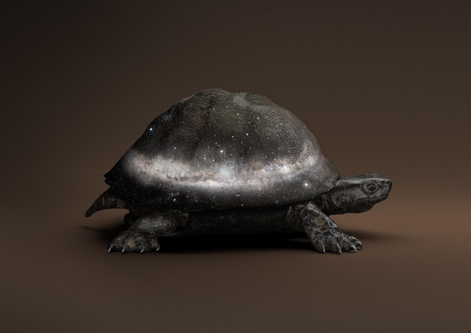 © Vincent Fournier,  Black Celestial Tortoise [Manouria Praecognito] ,(Post Natural History series), 2018.