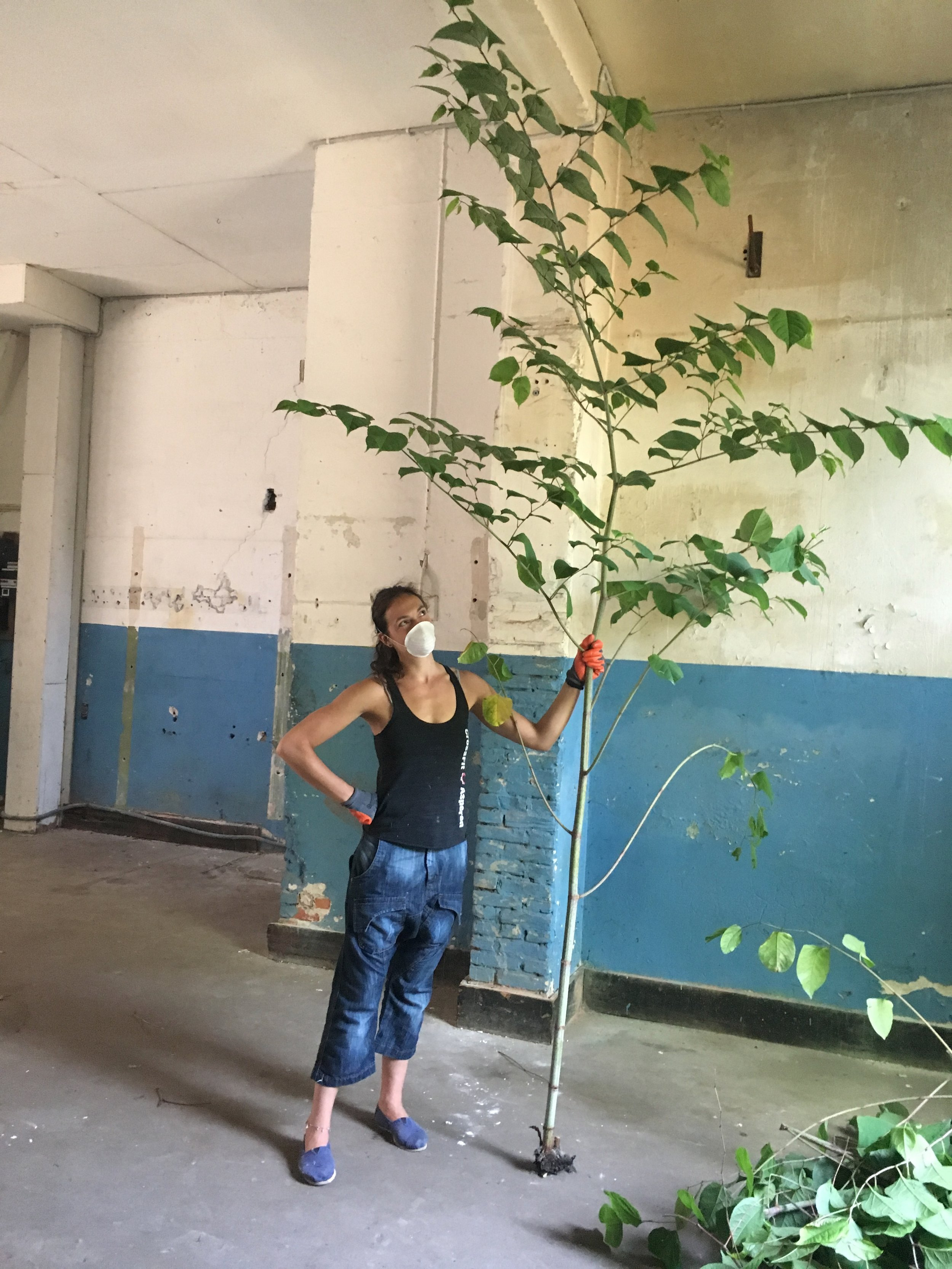 weeds as tall as trees, oh my