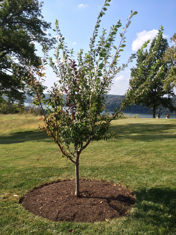 tree_38_2014sm.jpg