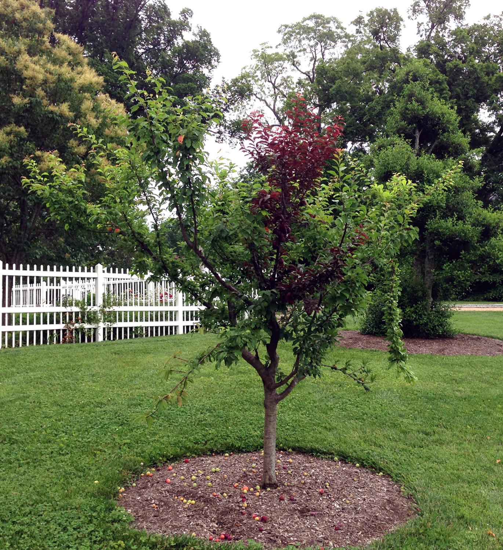tree_38_2016sm.jpg