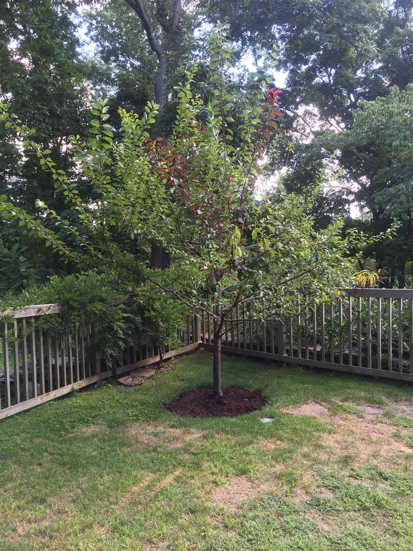tree_71_2015sm.jpg